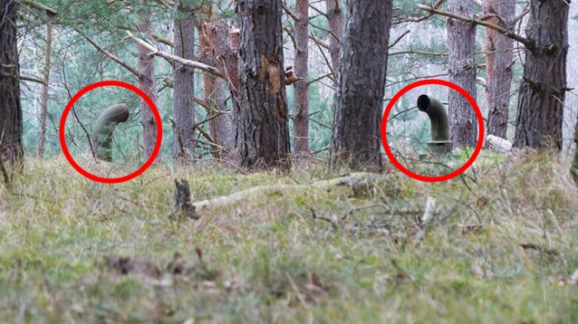 Orman Korucusu İnanılmaz Bir Şey Keşfetti galerisi resim 2