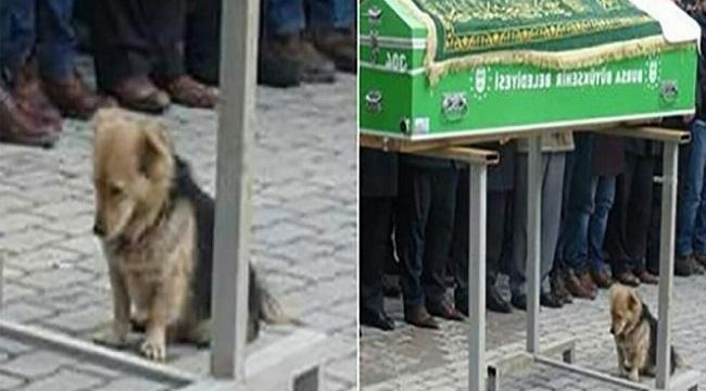 Evden Kaçan Köpeğin Nereye Gittiğini Görünce Gözyaşlarını Tutamadı