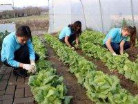 Lise Öğrencileri Yerli Tohumla Sebze Üretimine Başlamış ! Yetişen Ürünleride İhtiyaç SAhibi Alilelere Dağıtıyorlarmış